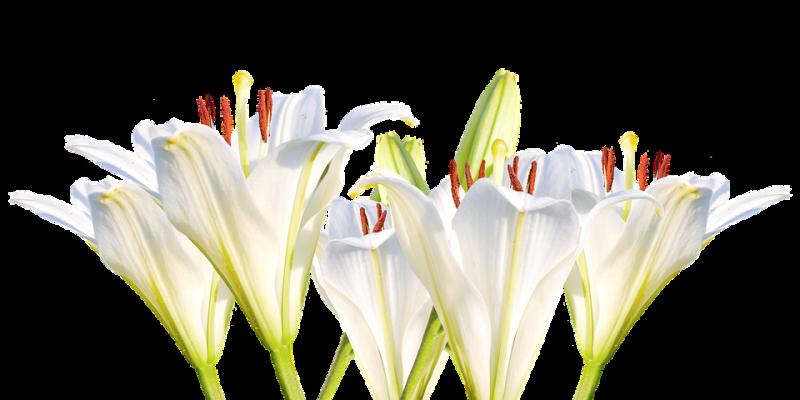 Faites plaisir avec des fleurs originales et variées