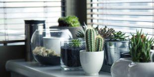 Choisir ses plantes d'intérieur : plantes et fleurs fraîches ou artificielles ?