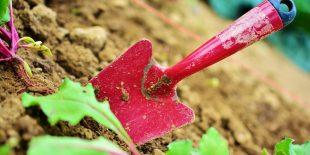 Quels sont les outils indispensables pour entretenir votre jardin?