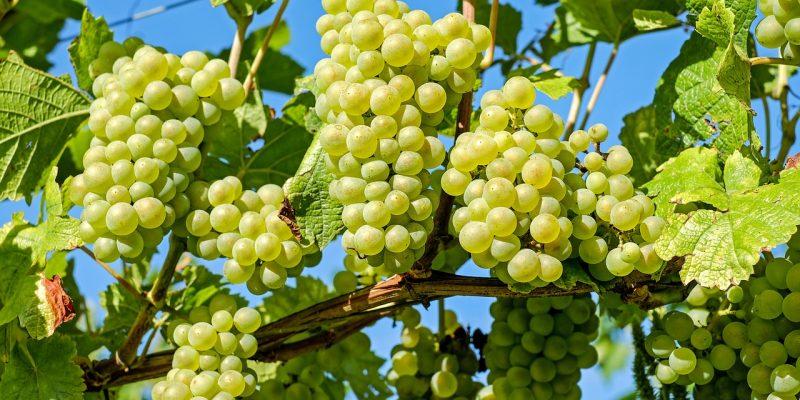 Les vignobles français à connaitre