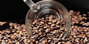 Tout savoir sur le café